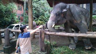 タイでIELTS学習